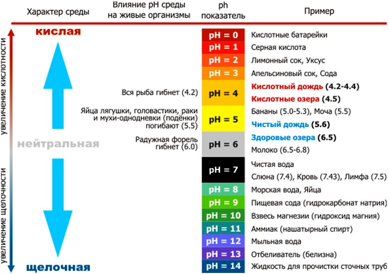 составе обязательств что означает повышенная кислотность питьевой воды Нижнего Новгорода работе